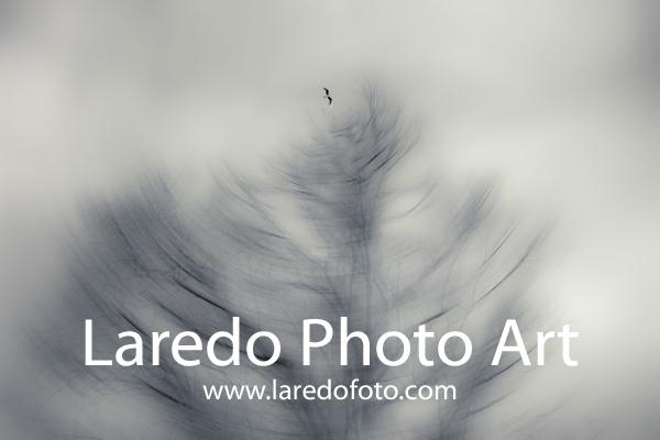 laredofotoart